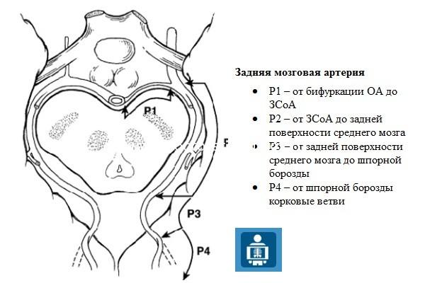 Задняя мозговая артерия (ЗМА)