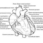 Коронарные артерии. Ветви. Шунтирование